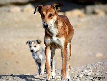Chiot et chien