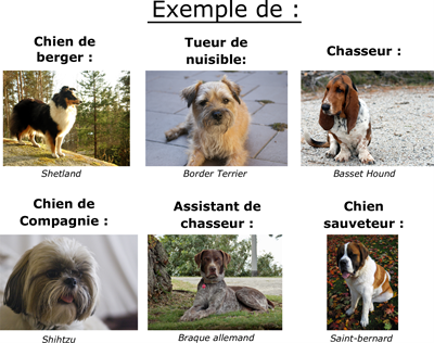 Exemples de types de races