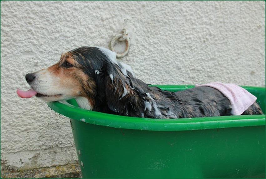 Bain en bassine