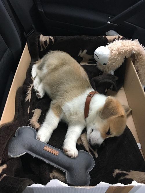 Günther durant son premier voyage retour