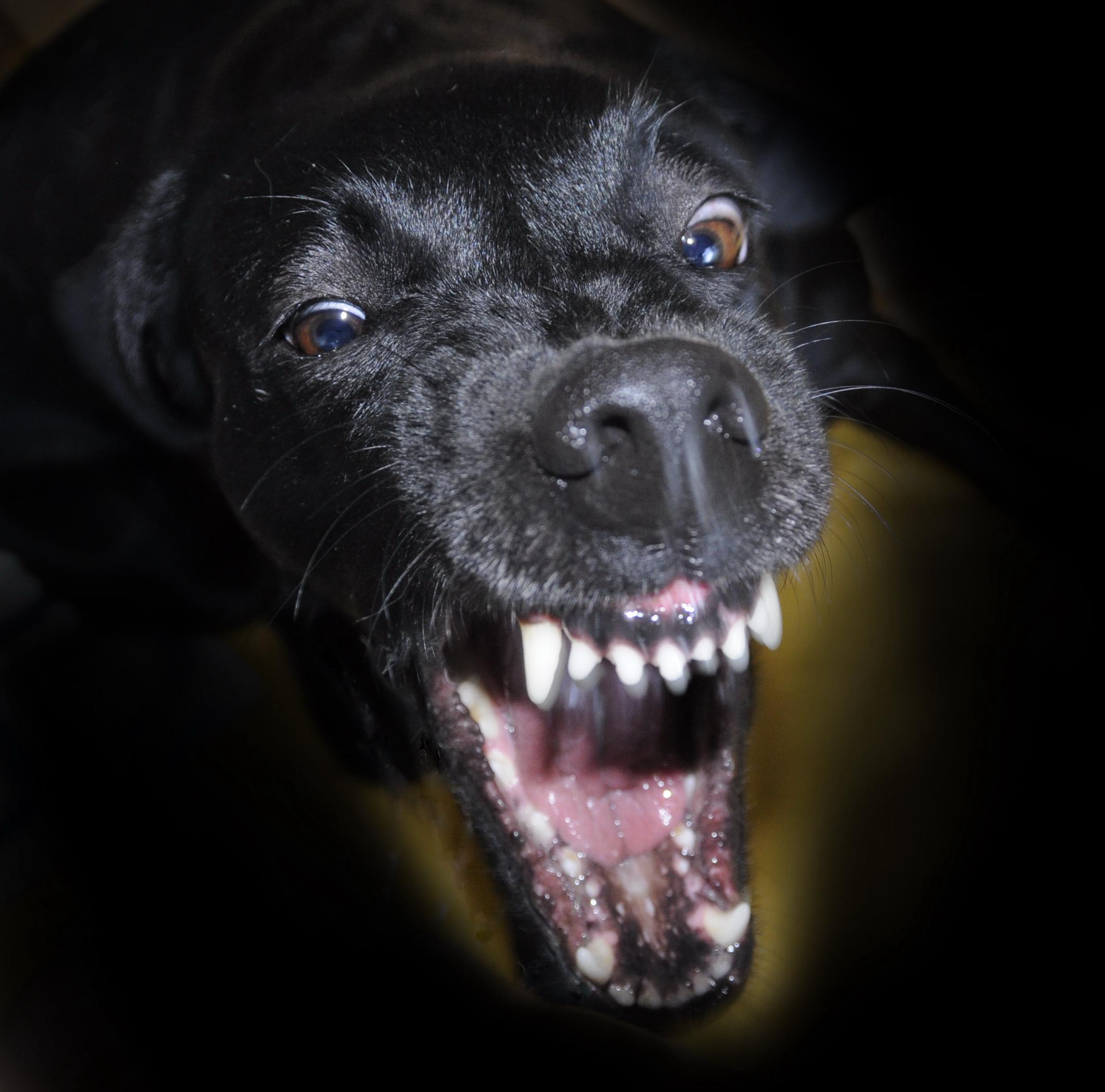 Éduquer son chien_Pourquoi il est IMPOSSIBLE que vous y parveniez