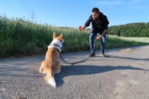 Apprendre le pas bouger à son chiot