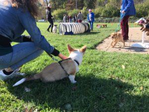 Cours en club d'éducation canine