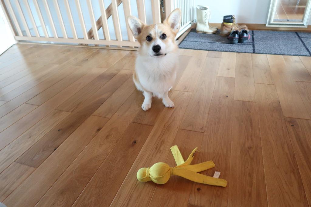 """Günther et son """"Wubba"""", un de ses jouets préférés"""