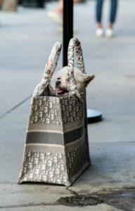 Le sac à course, j'adore !