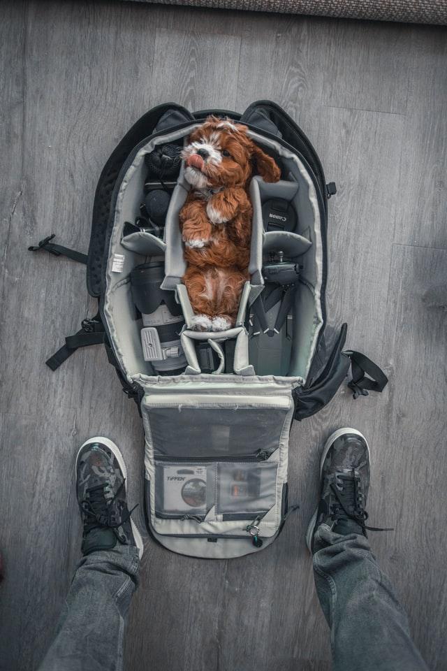 Caché dans le sac