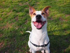 Éducation positive du chien : 6 raisons de la pratiquer
