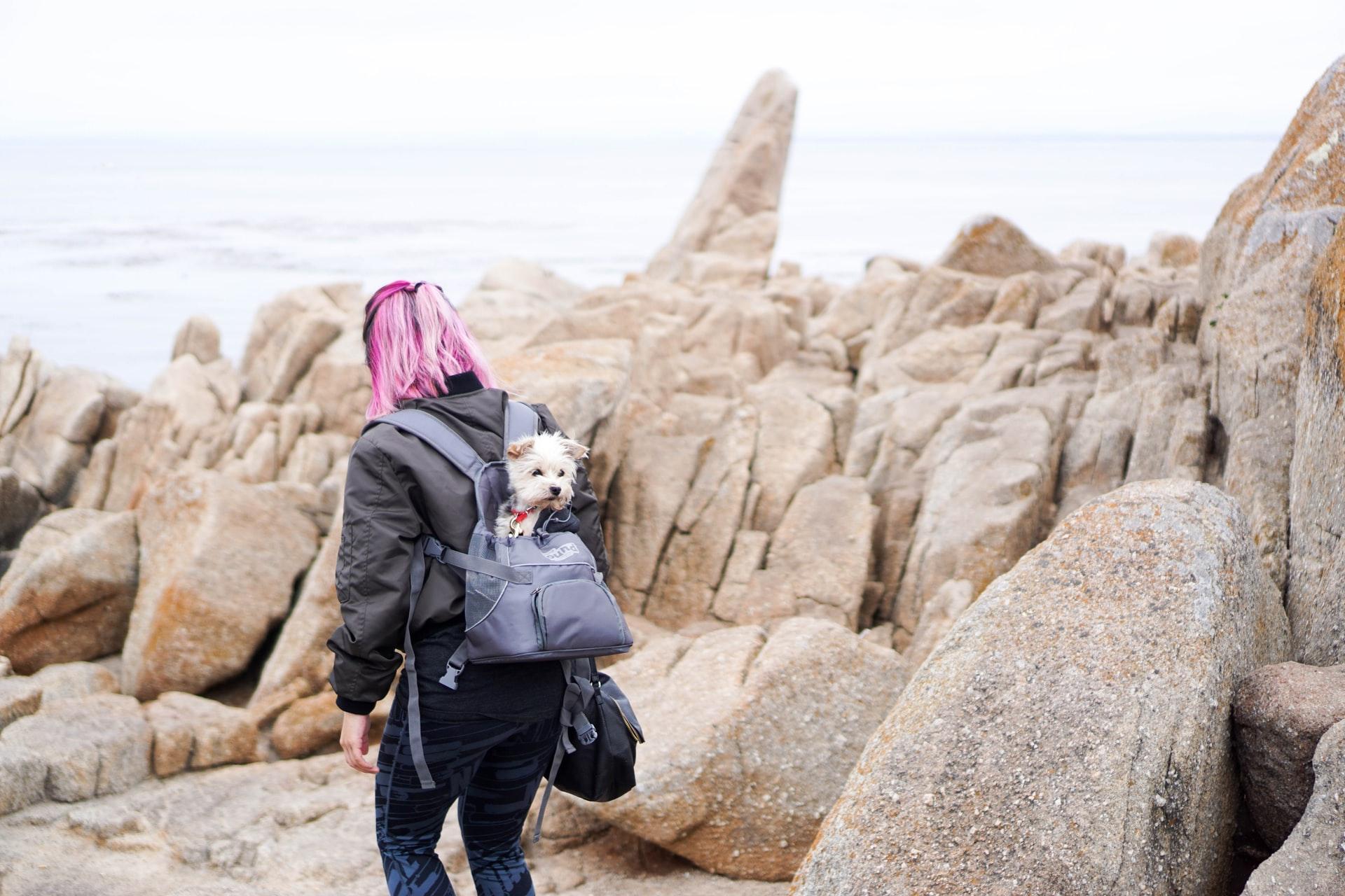 Sac à dos pour chien : Nouveau défi !