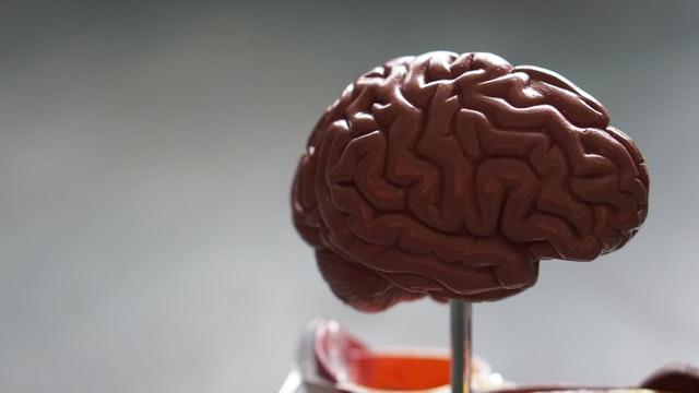 Le cerveau du chien ne fonctionne pas pareil que celui de l'homme !
