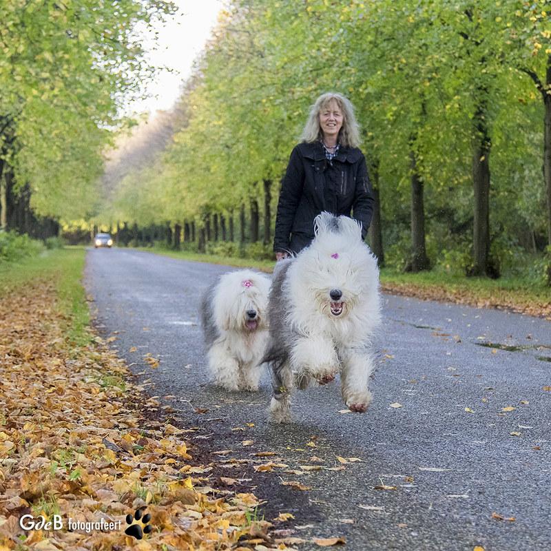 Rien de mieux qu'un promenade avec des copains chiens !
