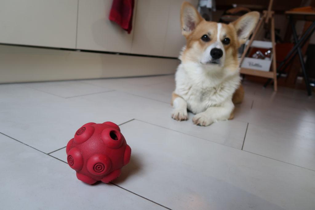Une balle qui distribue des friandises ou des croquettes. Notre chien Günther l'adore !