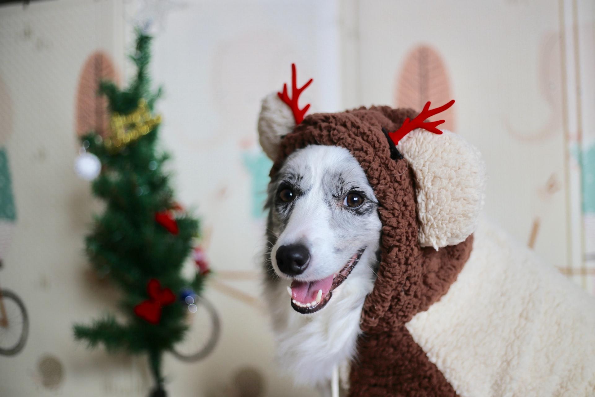 6 idées cadeaux pour chien de Noël