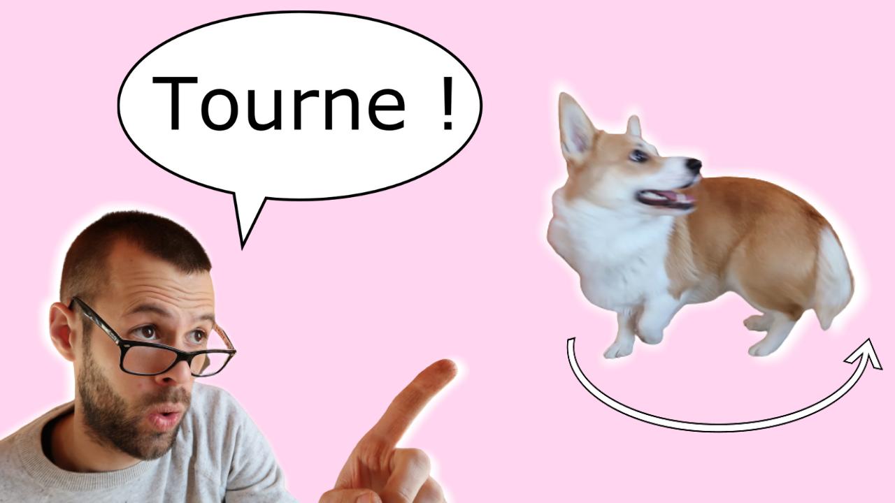 Apprendre à son chien à tourner (+ Expérience pratique)