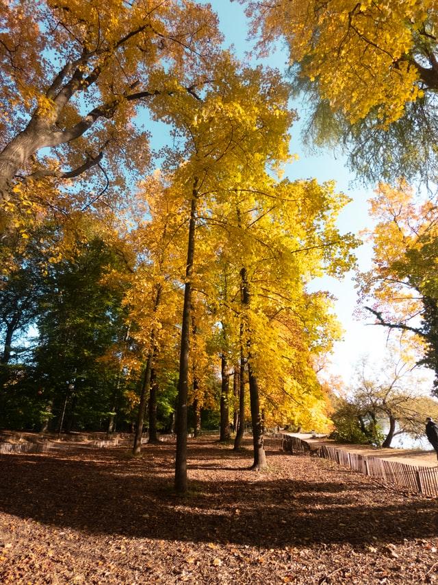 Parc ensoleillé en automne. Les arbres ont des couleurs de saisons et des feuilles jonchent le sol.