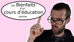 Cours d'éducation canine : Les bénéfices
