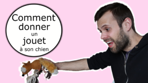 Comment donner un jouet à son chien