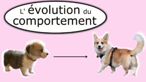 L'évolution du comportement d'un chien (de chiot à chien)