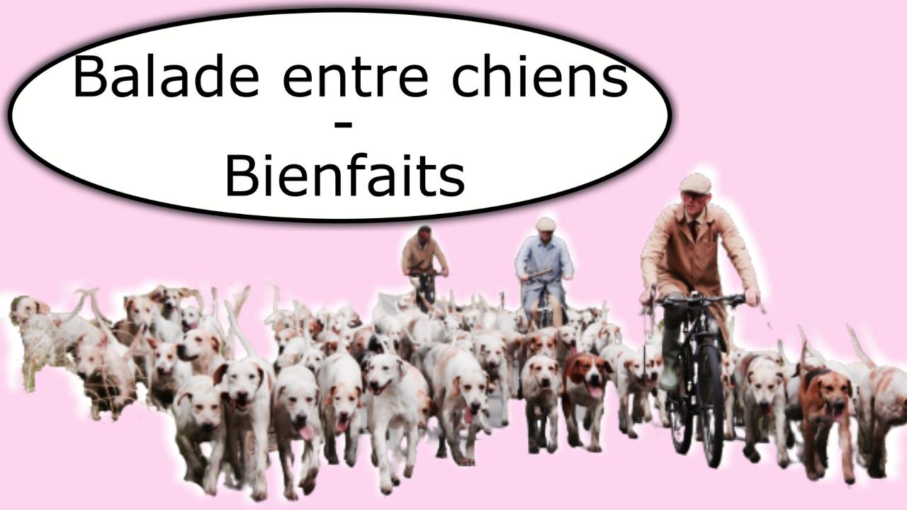 Promenade entre chiens - Tous les bienfaits