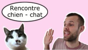 Rencontre avec le chat de la maison