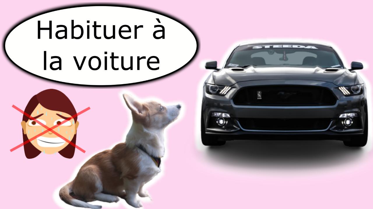 Comment habituer son chien à la voiture
