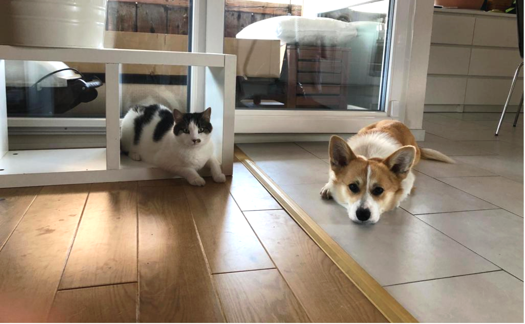 Présentation chien-chat : Notre plus grosse erreur