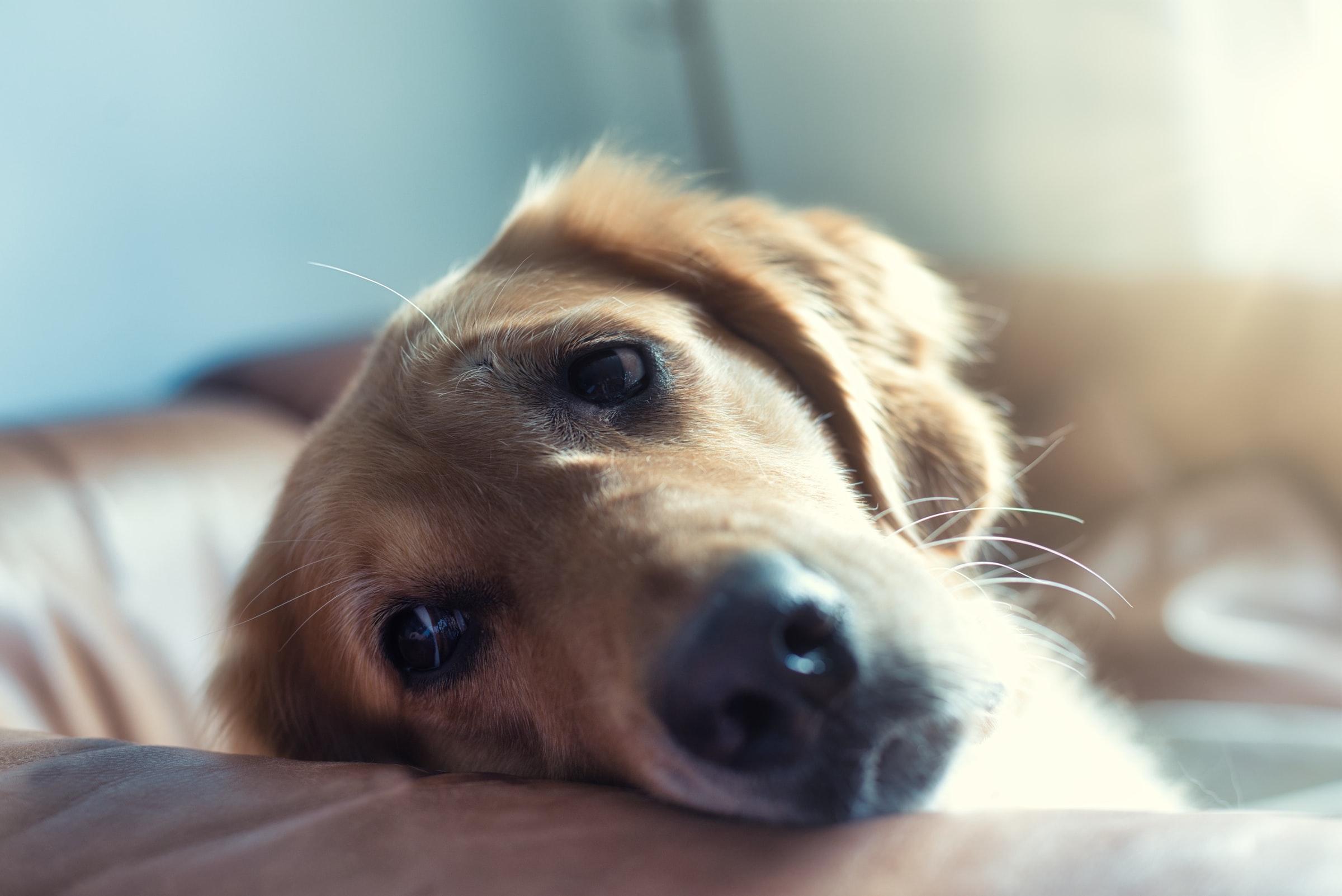 Ma plus grosse erreur avec mon chien : Ils vous disent tout !