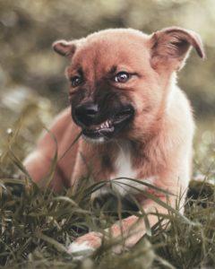 Votre chien est contrarié ? Ne pas l'écouter, c'est risquer gros !