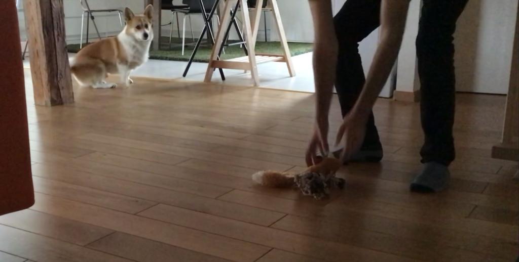Rendre le jouet intéressant pour donner envie à son chien de venir l'attraper
